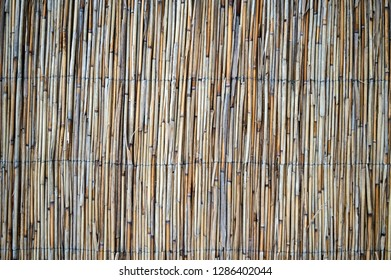 Background of reed. Reed Isolated. Traditional fence made of bamboo reed. Asian style.