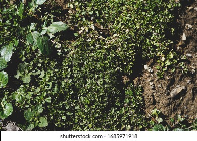 Background resource image of a mound of dirt with fresh greenery, weeds growing on top.