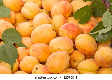 Background of ripe apricots. Natural background