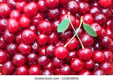 Background of ripe cherries close up.