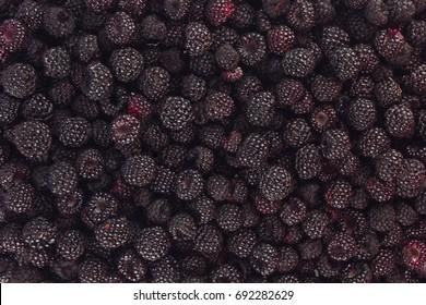 Background of ripe juicy black raspberry blackberry.