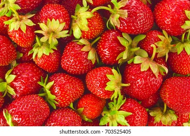 Background of ripe juicy organic farm strawberries with green leaves.