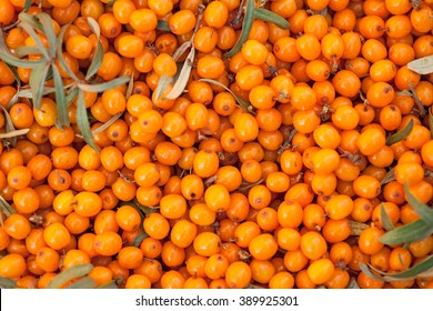 Background of ripe sea-buckthorn berries. This product contain the plenty of vitamin C