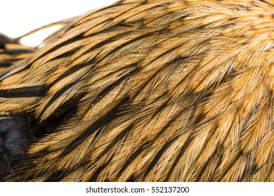 background rooster feathers