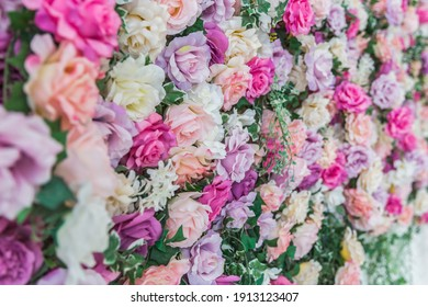 Background with roses of different colors close-up.