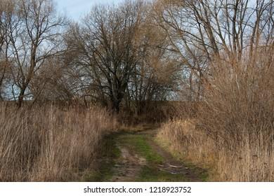 background - rural landscape