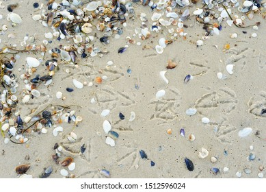 background in the sand footprints of birds and shells