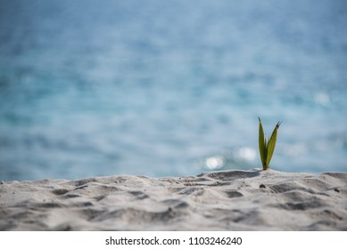 background of sea side with small young palm tree
