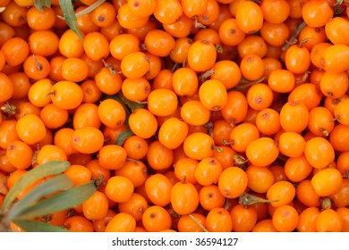 Background from sea-buckthorn berries (Hippophae rhamnoides). This product contain the plenty of vitamin C