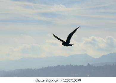 Background of Seagull bird fling in the blue sky and clouds with sunlight in spring season.