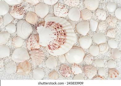 background from seashells and starfish coarse sand