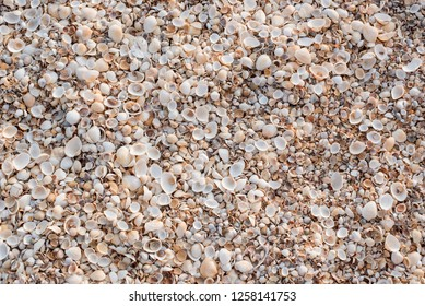 The background of the set of seashells lying on the beach is chaotic.