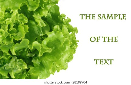Background with sheet salad of green color and a place for the text.