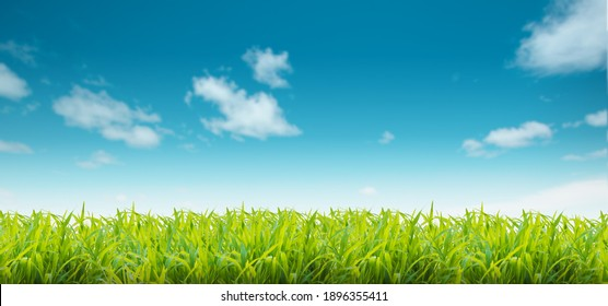 Background or sky backdrop blurred Outdoor nature