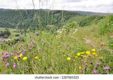 Background of small village in Belgium name Rochefort, Ardennes with very beautiful view of landscape and small yellow and purple colors of flowers around the mountain.