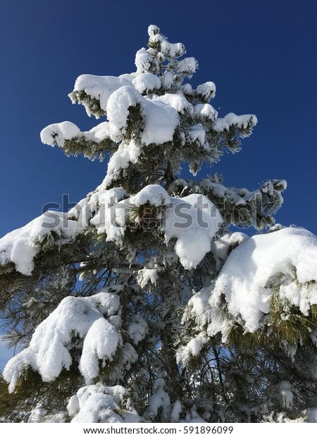 background of snow and trees