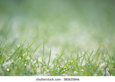 background sparkling grass lawn raindrops dewdrops with shallow depth of field and copy space