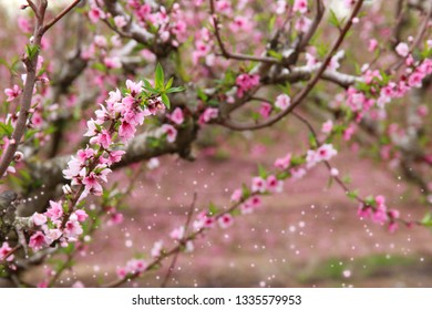 background of spring blossom tree with pink beautiful flowers. selective focus