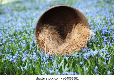 Background Of Spring Flower Field And Bucket Prop