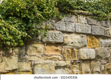 Background of stone wall with vine