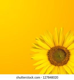 background sunflower