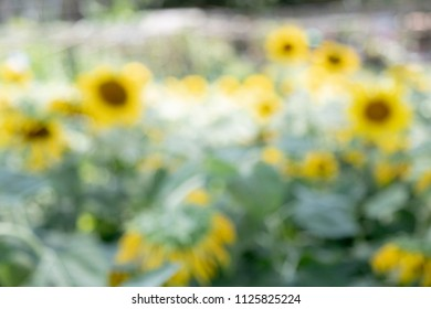 background of sunflower bokeh wallpaper