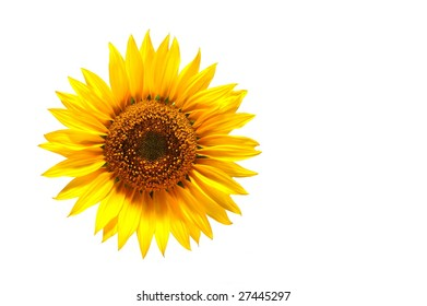 background with sunflower for happy summer or springtime