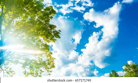 Background sunny day sky with white clouds and green tree leaves branch.