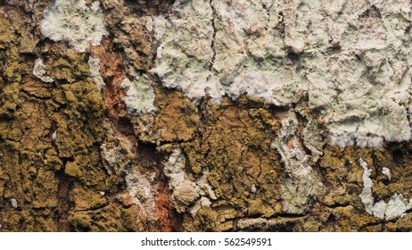 background texture abstract