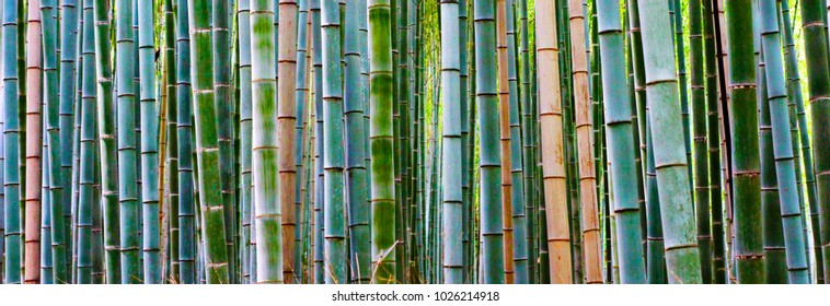 background, texture Bamboo stalk green
