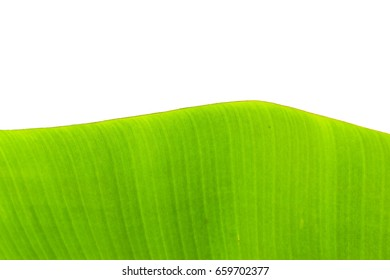 The background and texture of a banana on a beautiful green banana on a white background.