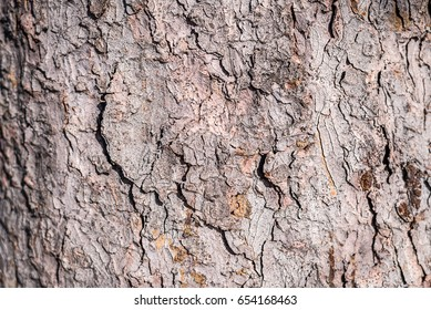 Background. Texture of the bark of a tree on the whole frame