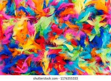 background texture of bright colorful feathers in rainbow colors