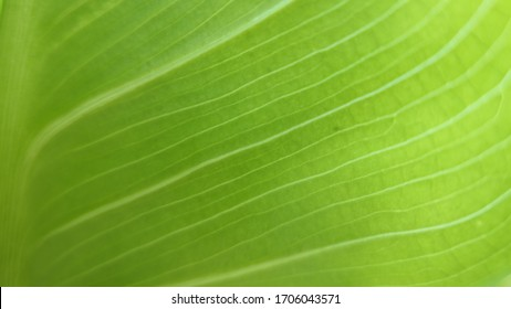 background texture  closeup of green leaves