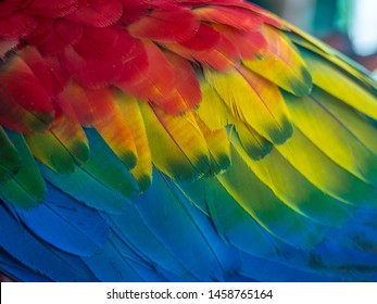 Background. Texture. Colorful feathers of Macaw parrots. Amazonia.