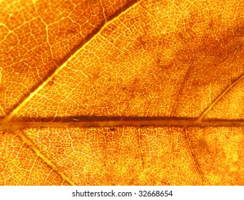 Background texture consisting of a close up to a dried leaf