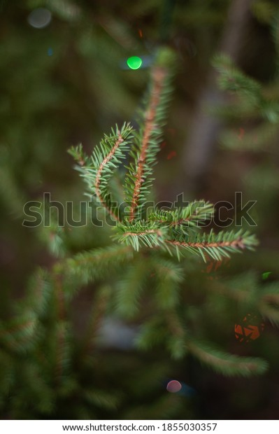 Background texture of dressed up christmas fir tree branch for new year holiday