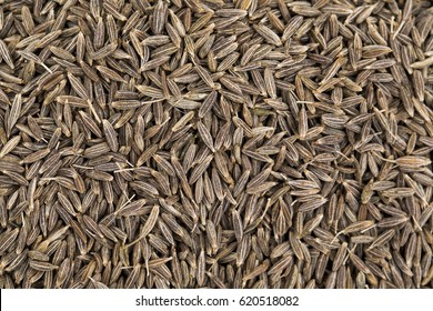 Background Texture of Dried Cumin Seeds Also Know as Caraway, jira or jeera Its seeds are used in the cuisines of many different cultures