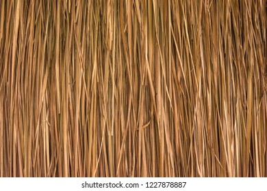 background texture from dried palm leaves