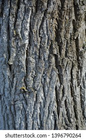 Background texture of dry tree bark. Tree bark. The texture of the tree bark.