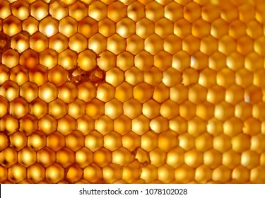 Background texture empty honeycomb, selective focus and blurry background.