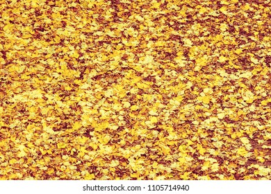 Background or texture of fallen autumn fall season foliage tree leaves.