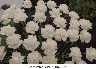 Background or Texture of a Floral Display of Perpetual Flowering Carnations (Dianthus 'Brava')