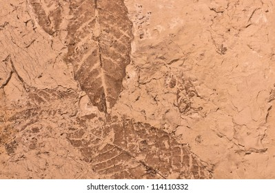 A background texture of fossils of leaves in mud.