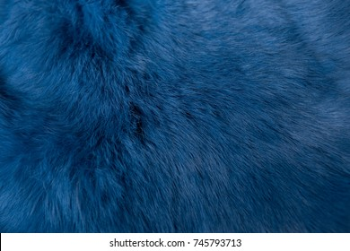 background texture of fur. rabbit fur blue color. blue fur