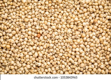 background and texture of gluten free white sorghum grain