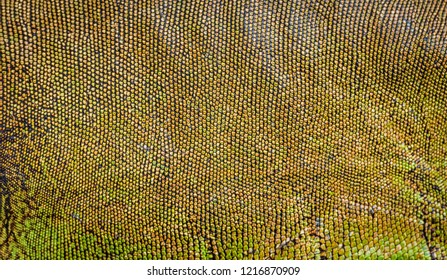 background texture iguana skin