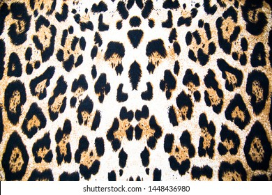 background texture leopard coloring skin