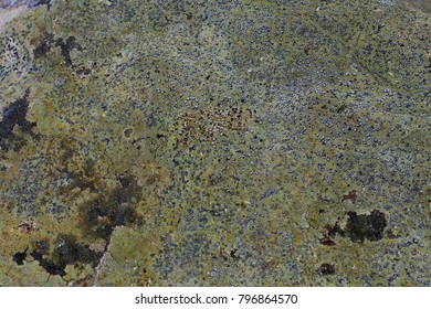 Background Texture of Lichen and Moss on a Stone for Grunge Effects.