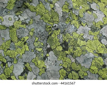 background texture with map-like patches of green and gray lichen